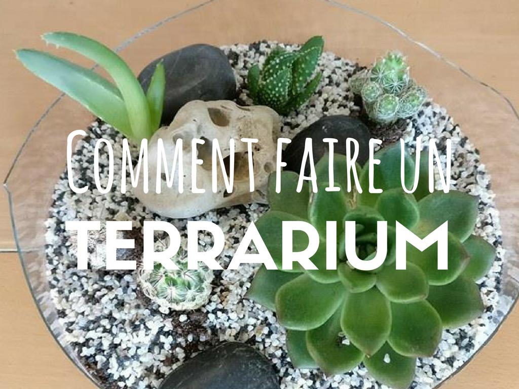 Comment Faire Un Terrarium Plante Grasse comment faire un terrarium (ouvert) ? | comment faire un