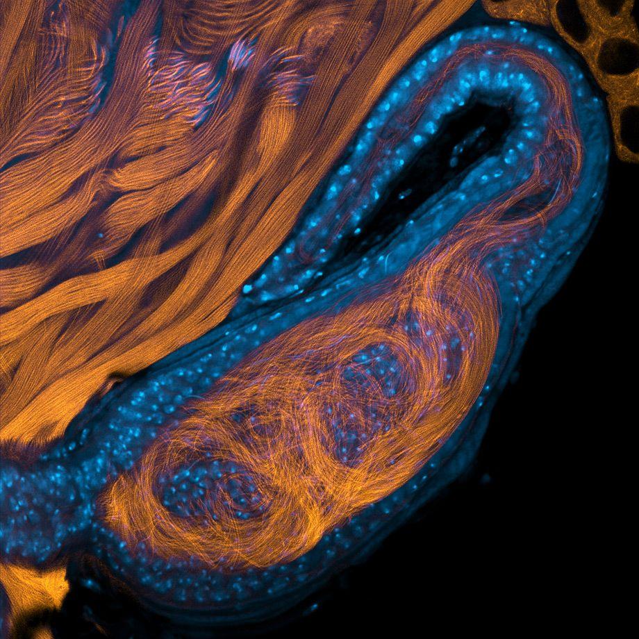 Incredible Photos of Tiny Animal Body Parts   Drosophila   Pinterest ...