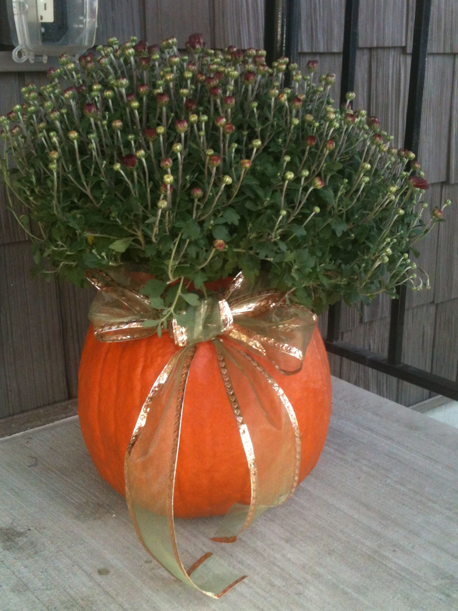 I bought the pumpking at walmart along with the plum mums! Got the ribbon at the dollar tree! Cut off the top of the pumpkin and gut it out (i kept the seeds to bake and the rest to make pumpkin pie), spray the inside with bleach and set the flowers inside. Enjoy:) Ill post more pics when the flowers bloom!
