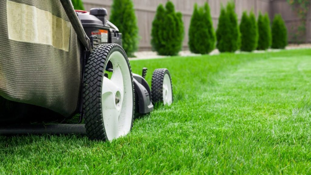 How to Save on Summer Lawn and Landscape Care Lawn care
