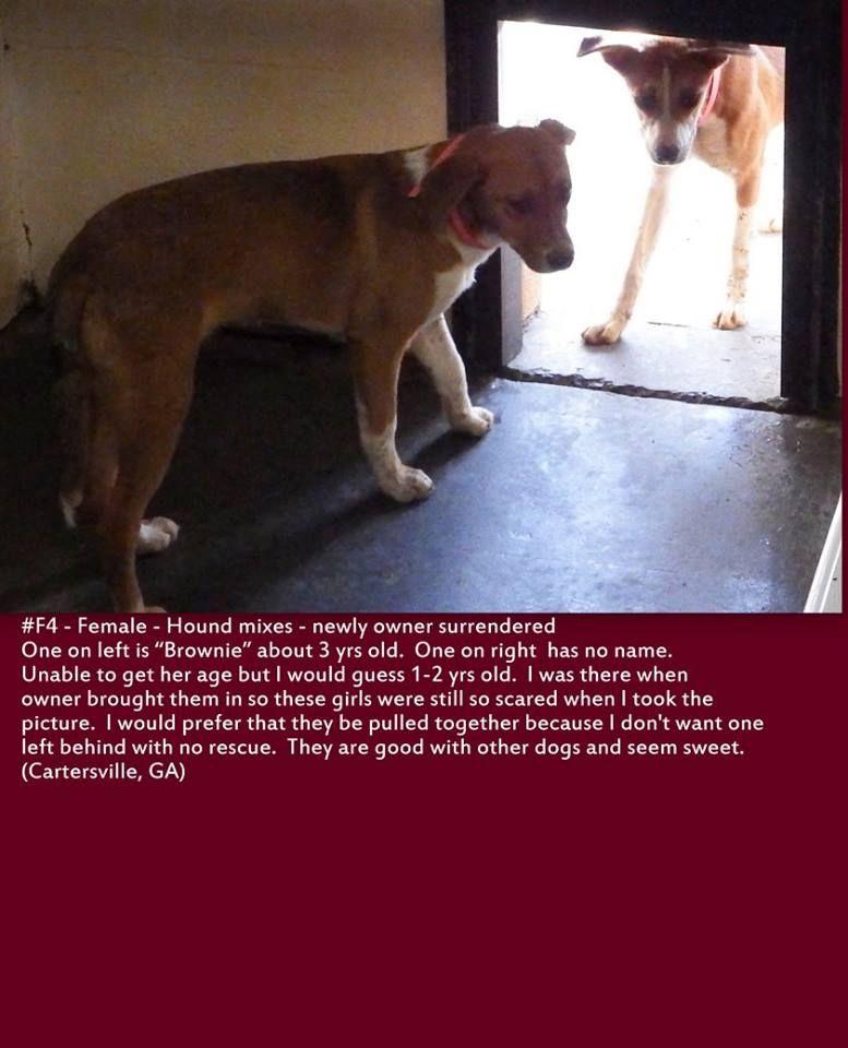 14++ All humane animal rescue ideas