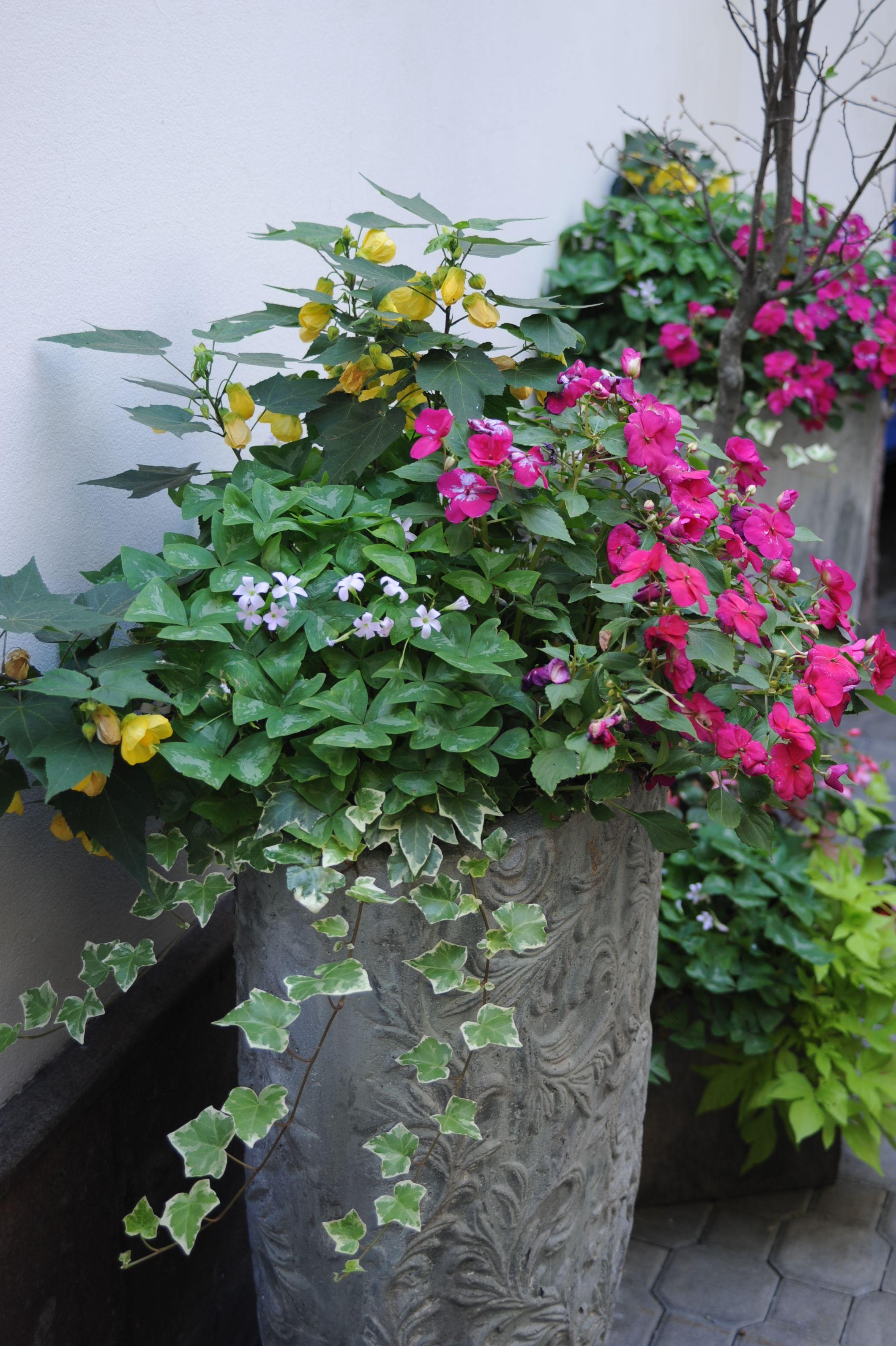 Ogrod Lobzow Ogrod Lobzow Container Gardening Plants Container