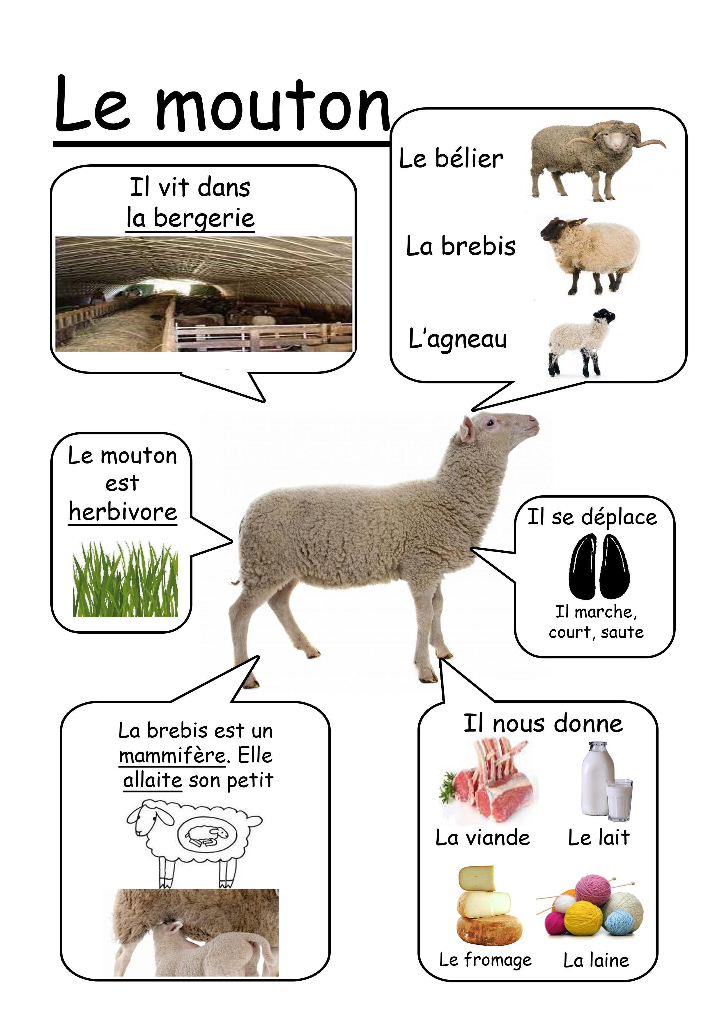 Mouton - Animaux de la ferme | Haziallatok | Pinterest | Französisch ...