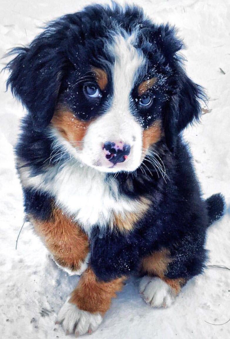 Coloriage De Chat Et Chien Mignon.Epingle Par Hallie Dawn Landis Sur Puppies Dogs C Chien