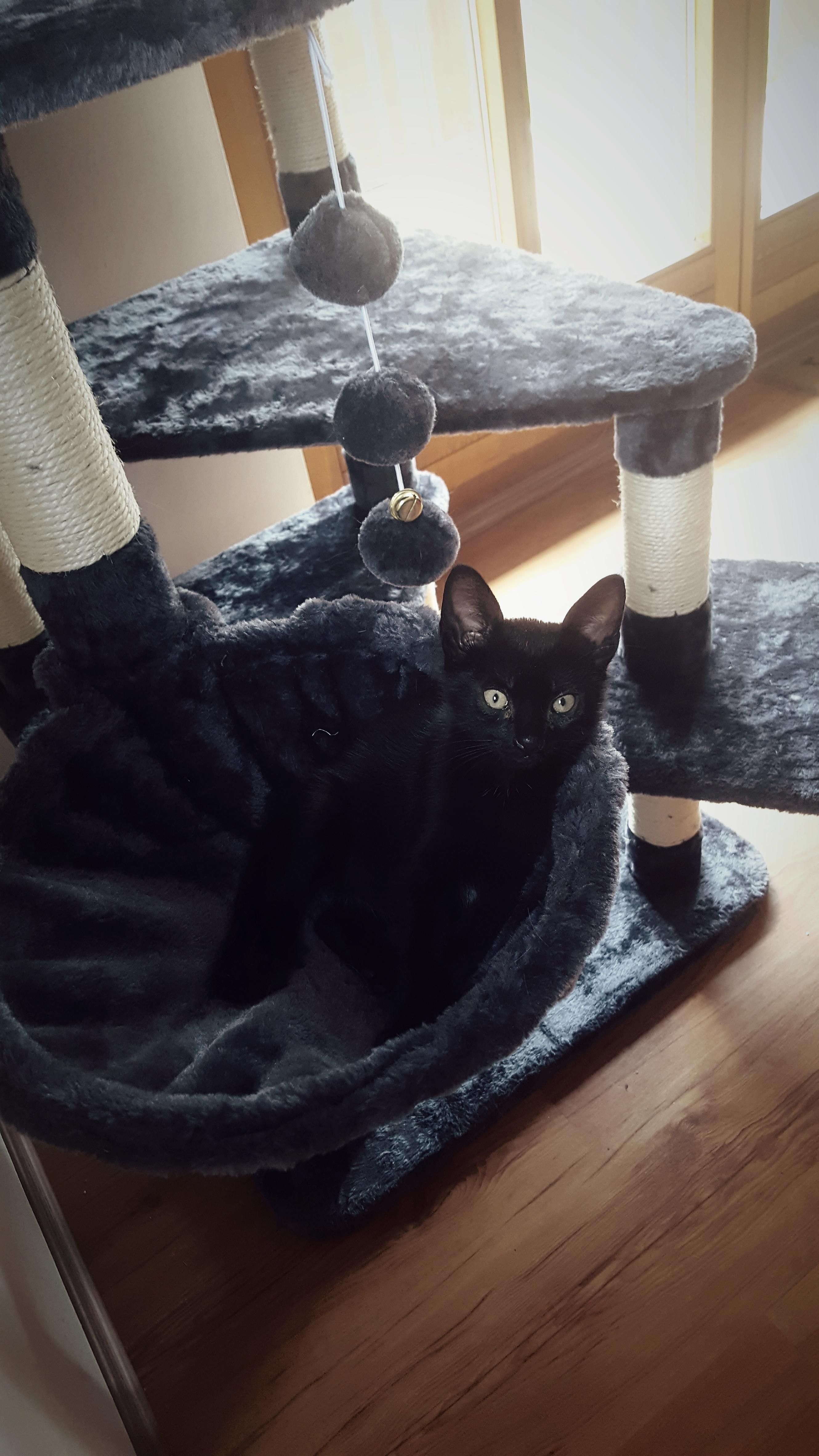 My 8week Old Called Wednesday Discovered The New Cat Tree Finally Kitten Names Cat Allergies Kittens
