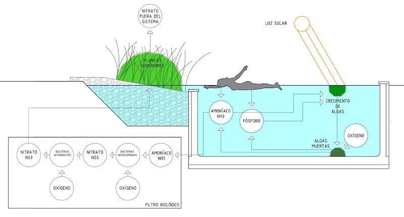 Como hacer una piscina natural m s ideas sobre piscinas for Como construir una piscina natural ecologica