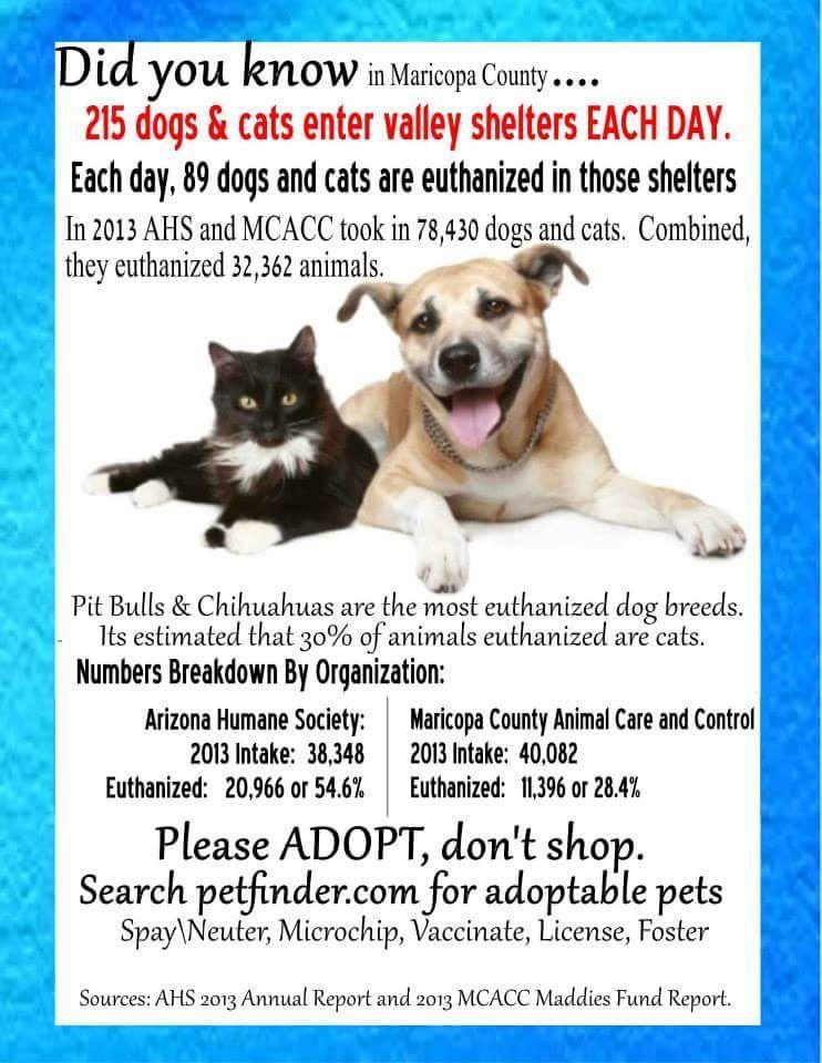 AZ adopt and foster.