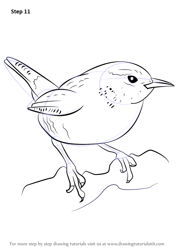 Wren is a tiny brown bird with golden shade on its feather. Although ...