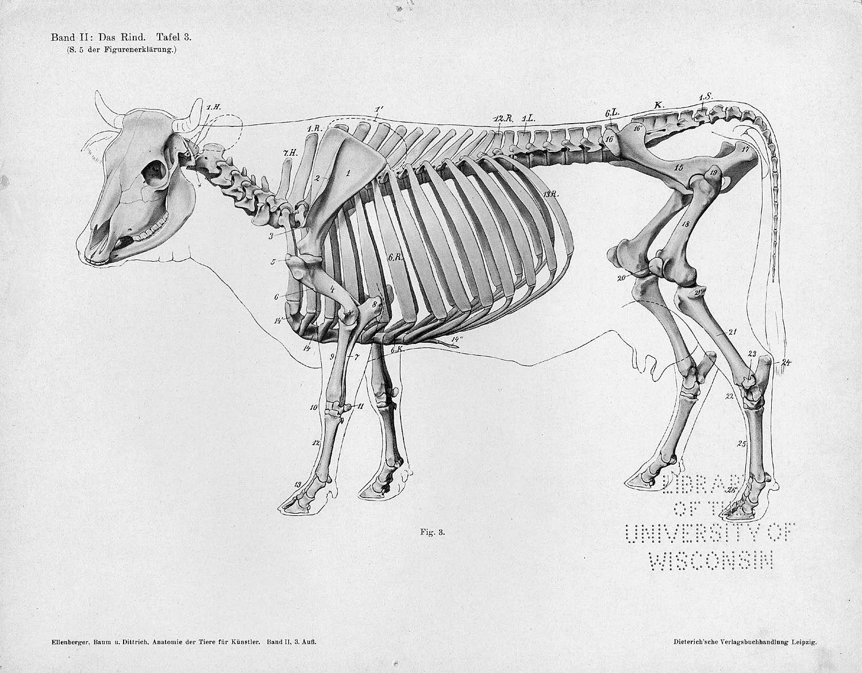 Anatomia animal comparada