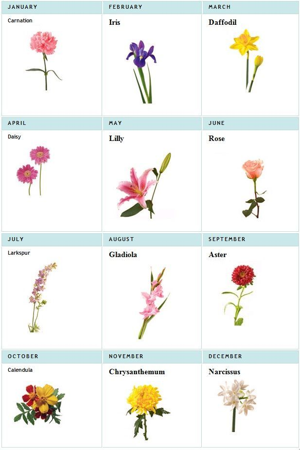 Image Result For Birth Month Flowers Chart I Need To Make This