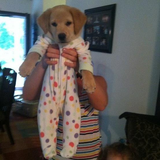 Just a puppy in a onesie.  So cute.
