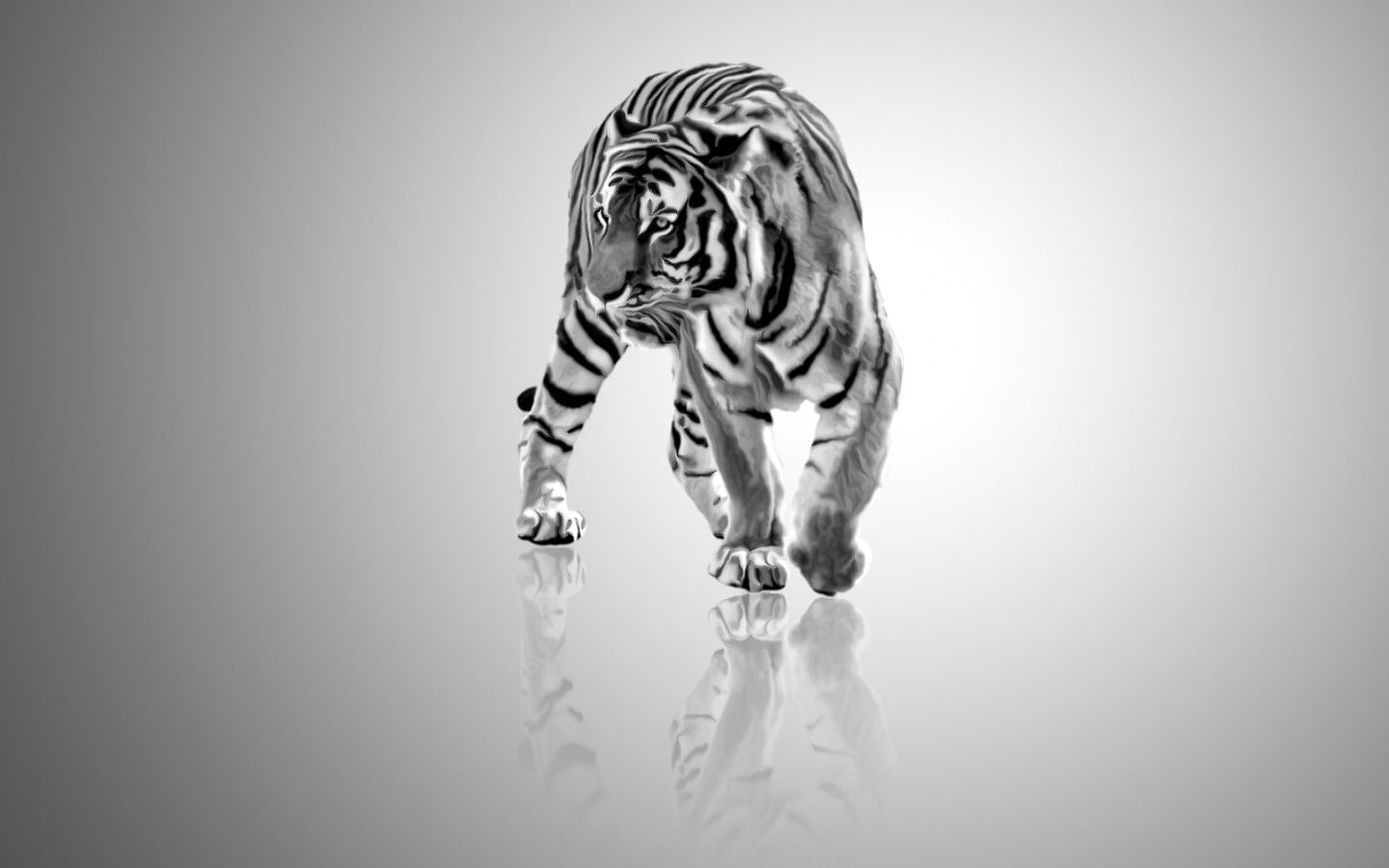 White Tiger Wallpapers High Definition | Animals ...