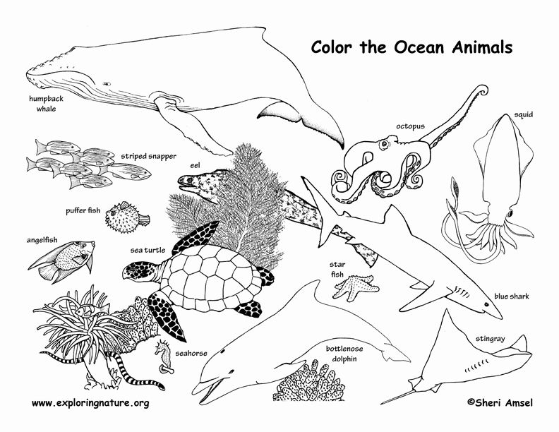 Animal Habitat Coloring Pages Elegant Habitats Of The World