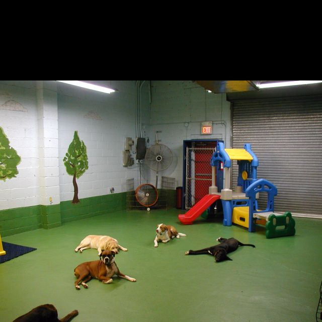 Dog room too cool- Painted floor T replace play ground with agility stuff