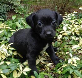 Adopt Dublin On Corgi Dog Terrier Mix Dogs Corgi