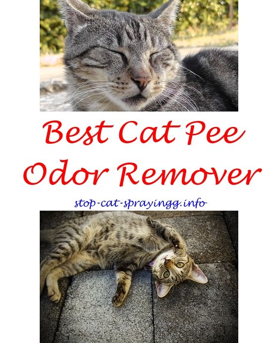 Cat Deterrent Spray Diy | Cat urine  ect | Cat pee, Flea