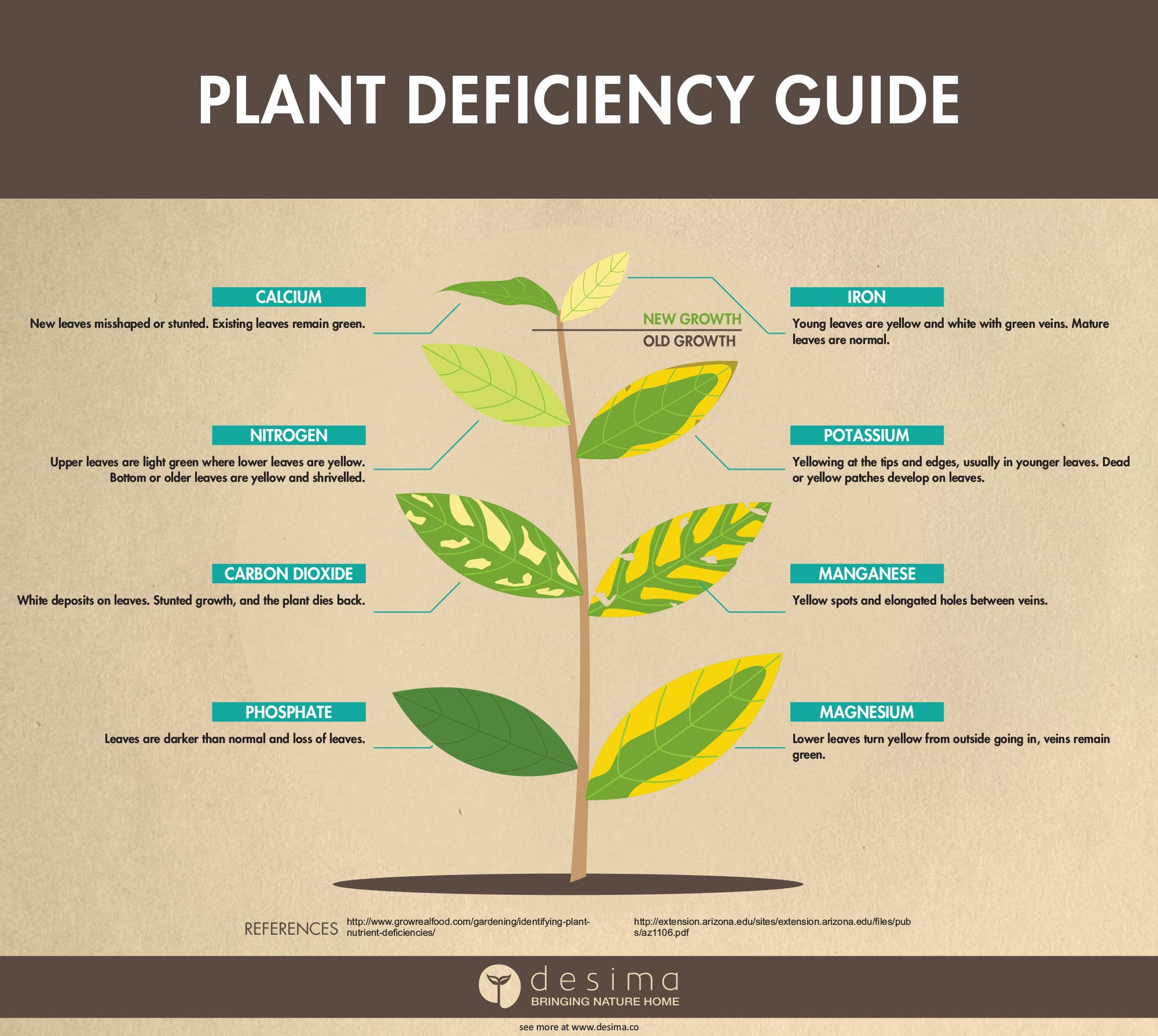 Identifying Plant Nutrient Deficiencies | Science | Avocado tree
