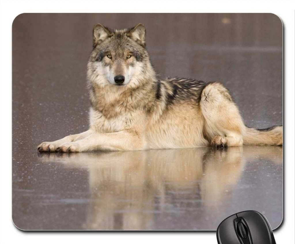 9811d5441727a Amazon.com : Timber wolf Mouse Pad, Mousepad (Dogs Mouse Pad ...