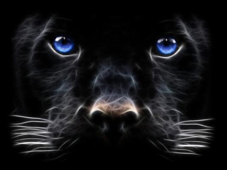 Blue Eyes Black Leopard Of Course The Eyes Are Electric Blue Panther Pictures Cat With Blue Eyes Beast Wallpaper