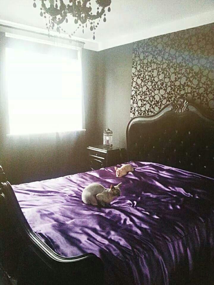 Best My Boudoir Noir Bedroom And My Sphynx Cats Vampira And 640 x 480
