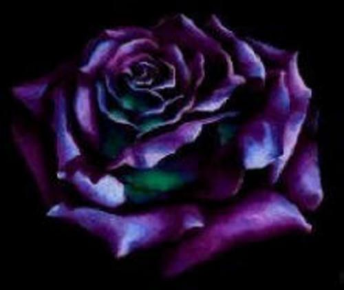 Dark Purple Roses Gothic Style Roses Gallery Purple Roses