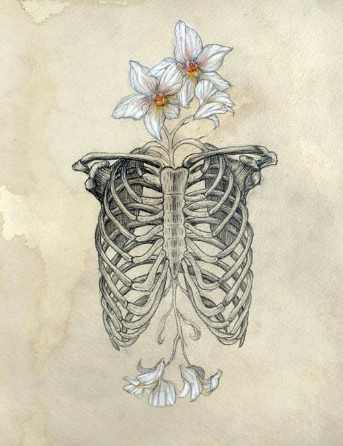 Rib Cage Drawing Art : drawing, Ribcage, Flowers, Anatomy, Indie