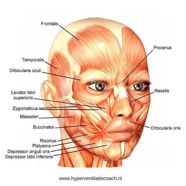 spieren in het gezicht
