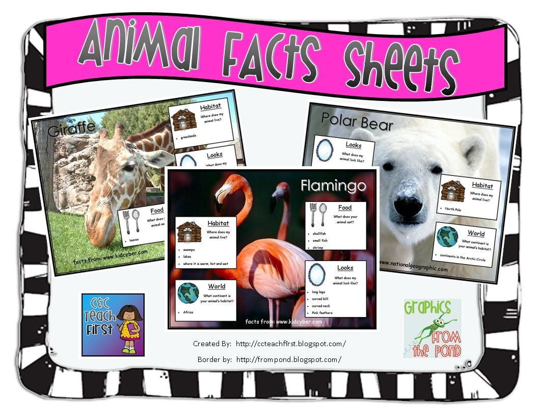 Animal Fact Sheets Freebie Students Write A Report On An Animal And Their Habitat Using These