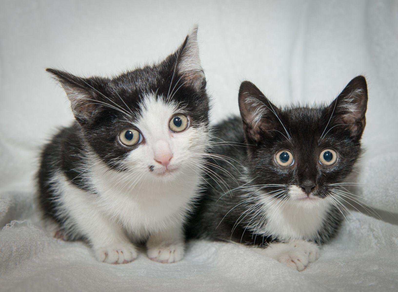 Tiffany Hagler Geard Photography Adopt Me My Animal Cat Adoption Humane Society