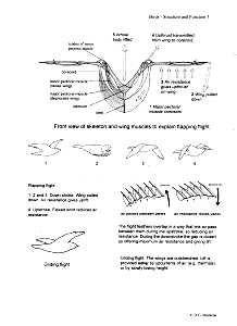 bird adaptation worksheets - Google Search | Education- Science ...