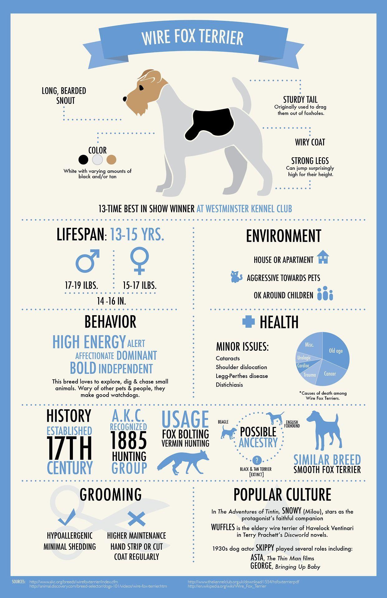 Wire Fox Terrier ! | Pups | Pinterest | Hunde, Die hunde und Schröder