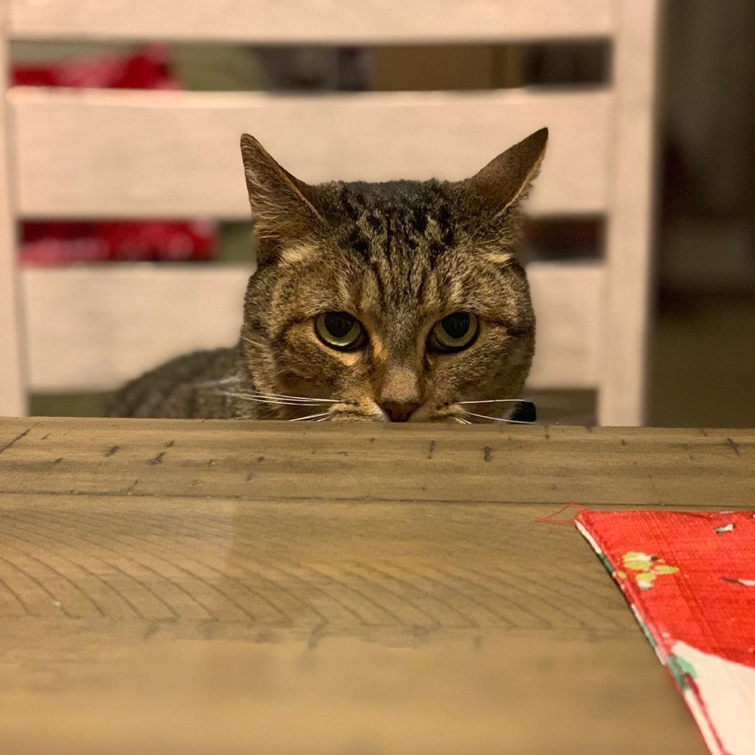 Jinjoo Be Checking Out That New Table Curious Furbaby Cats Catsofinstagram Catstagram Catsagram Cats Of Instagram Cats Catsofinstagram Cat Of Catsta In 2020 Met Afbeeldingen
