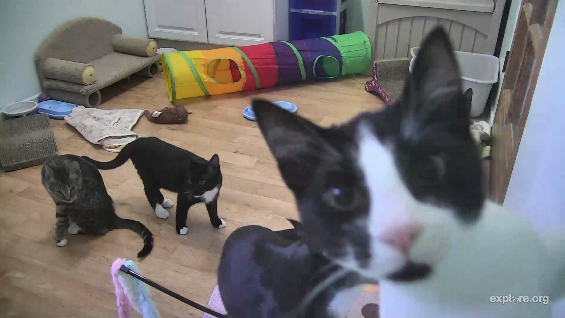 Wanna Join The Pawty Kittens Pets Rescue Stories
