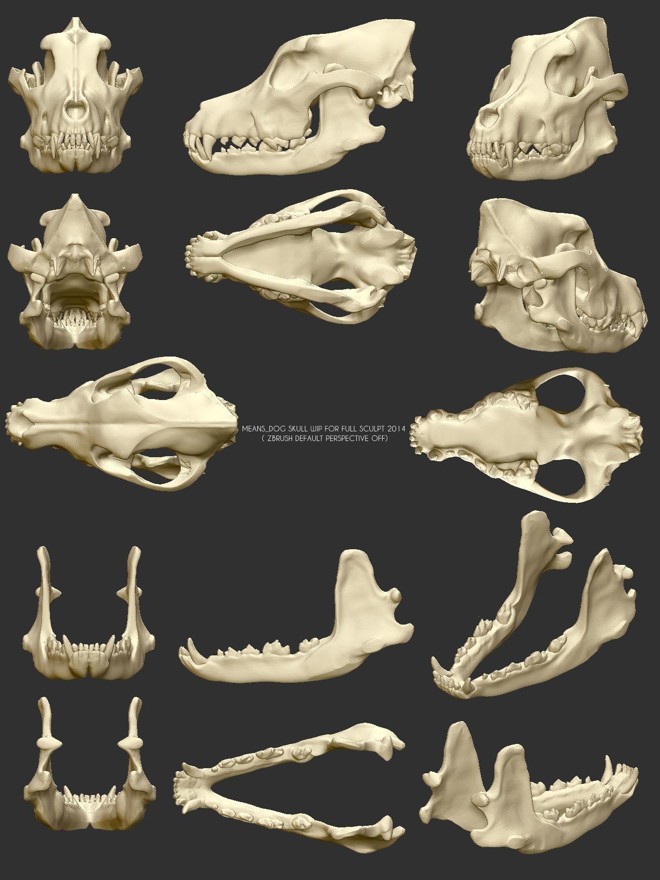 MEANS_ DOG SKULL SCULPT.jpg (1306×1740) | Животные | Pinterest | Dog ...