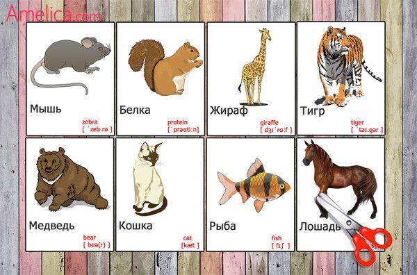 Картинки животных и название по английски
