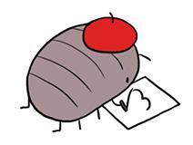 13 팬아트 콩벌레