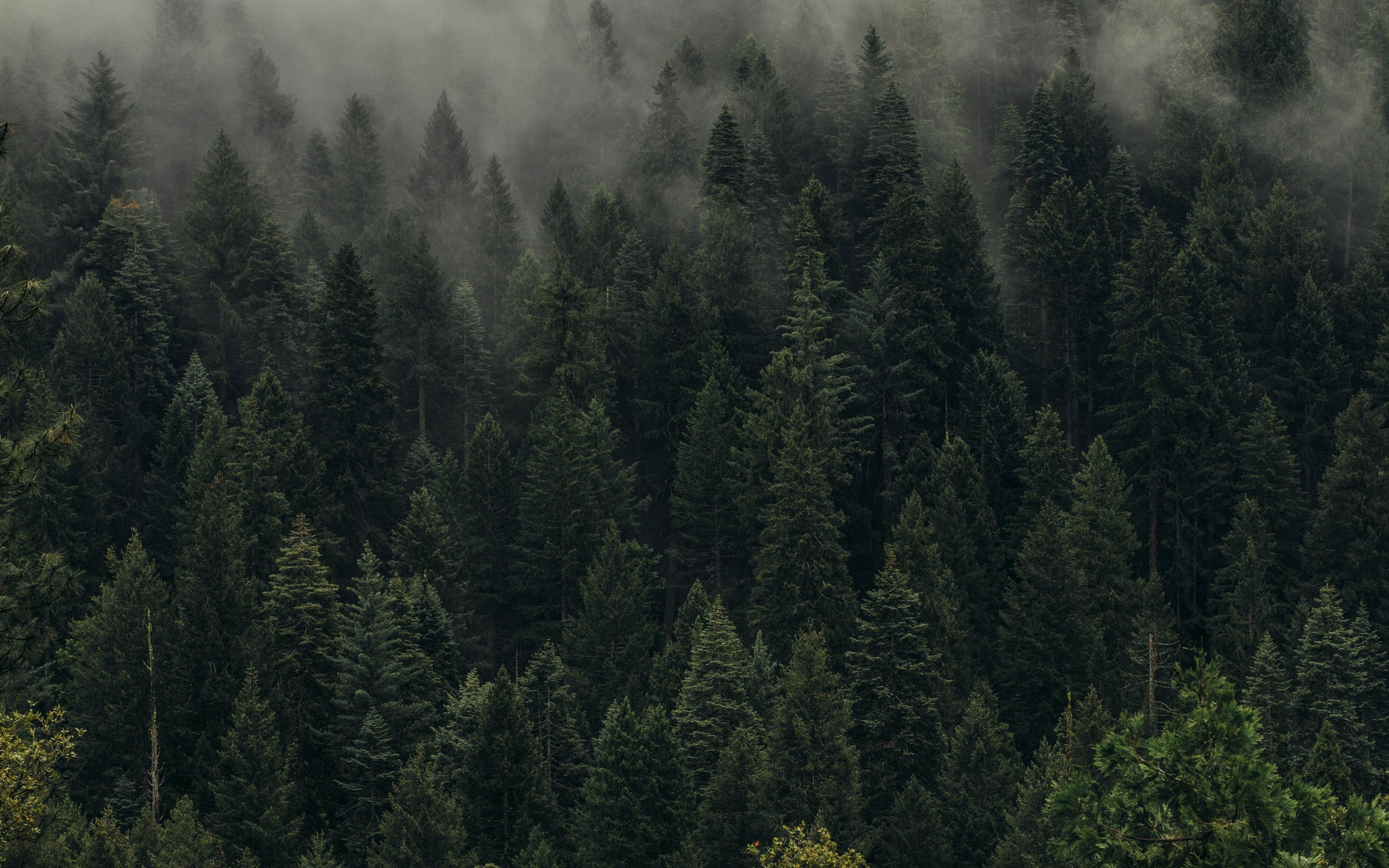 3840x2400 Wallpaper Trees Green Fog Forest Shroud Top View Forest Wallpaper Forest Nature