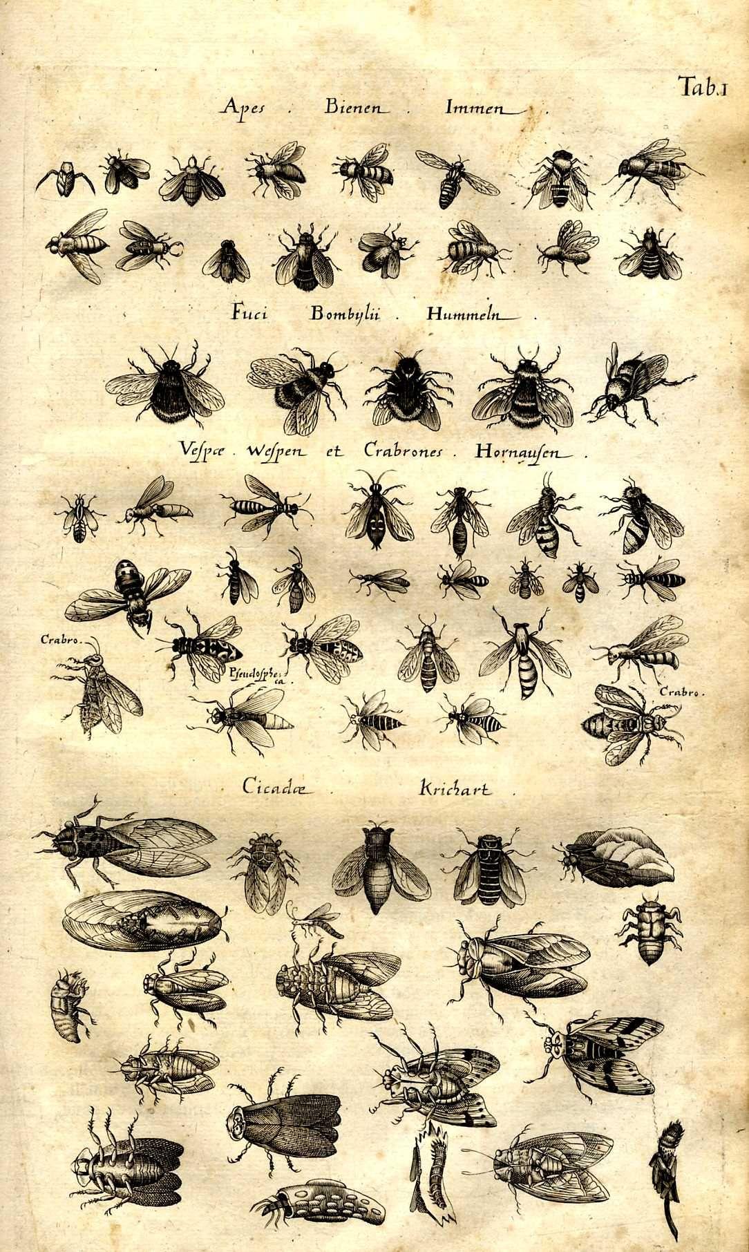 apiculteur vaison la romaine