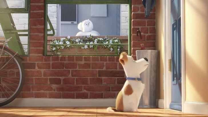 Download Max And Gidget Secret Life Of Pets 1920x1080 Pets Movie