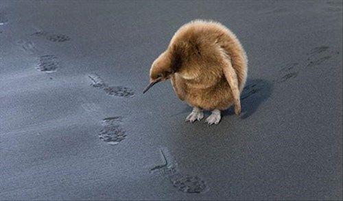 Those don't look like penguin footprints...
