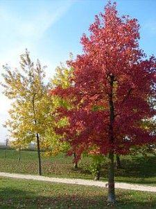 2013: gli alberi dettano legge http://www.sorgeniaecopensiero.it/2013/01/23/gli-alberi-dettano-legge/