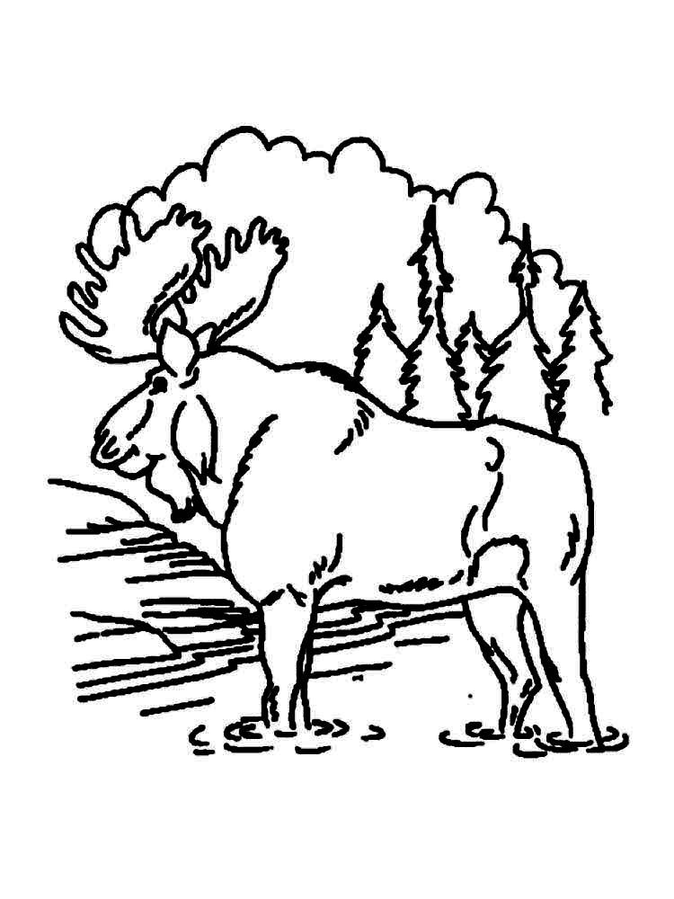 Coloring Pages Of Moose Animal Coloring Pages Coloring Pages Moose Animal
