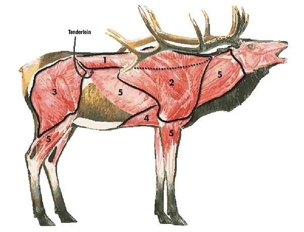 Elk Breakdown
