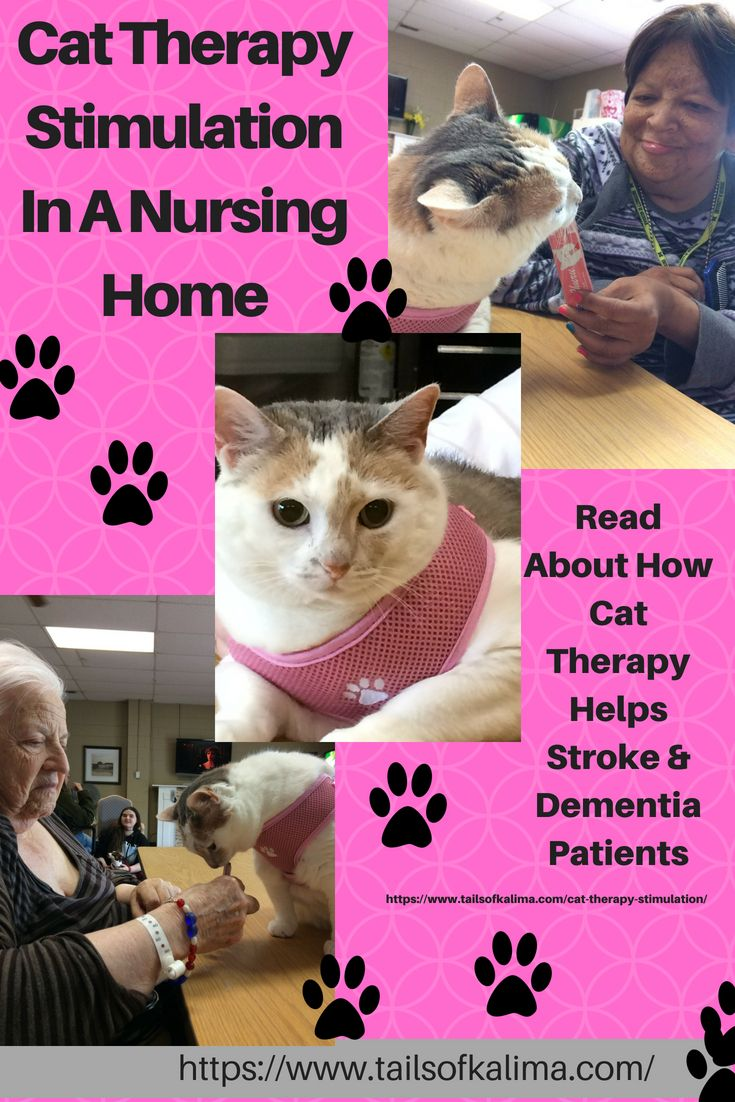 Cat Therapy Stimulation For Nursing Home Patients