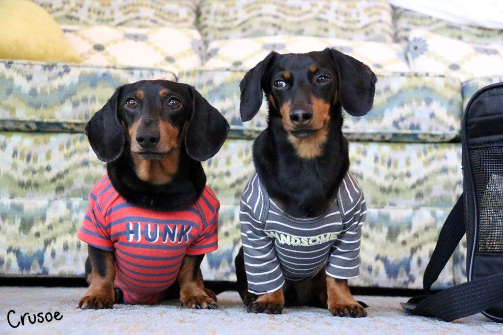Crusoe & Oakley Go To The Smokies! Crusoe the celebrity