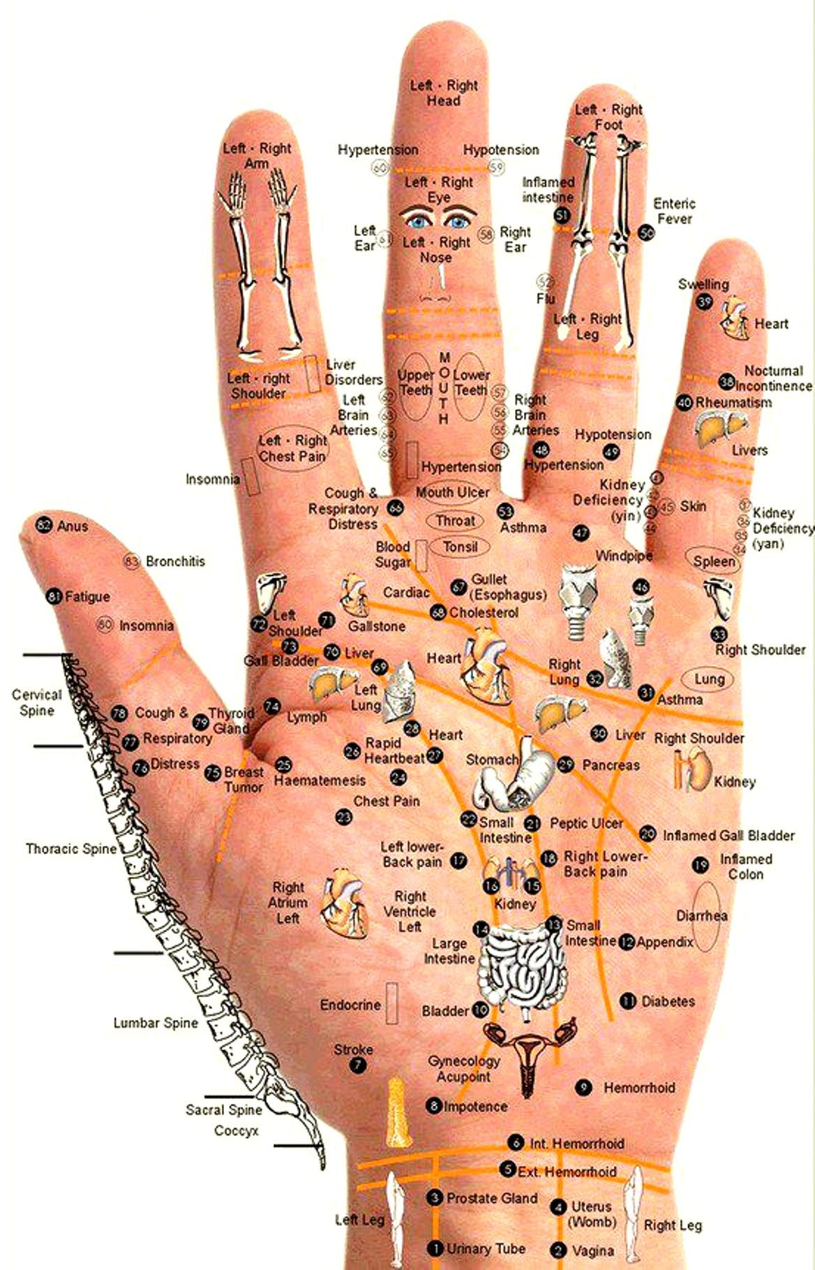 Reflexology or zone therapy chart of the hand also ancient chinese rh pinterest