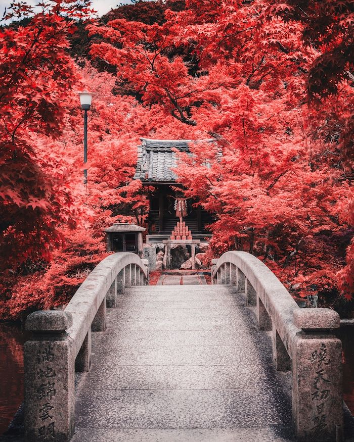 Beautiful photo of the foliage at the Nanzenji temple in Kyoto, one of the most beautiful temples in Kyoto. Click for inspiration for the best temples to visit in Kyoto. #travel #asia #japan #kyoto #foilage