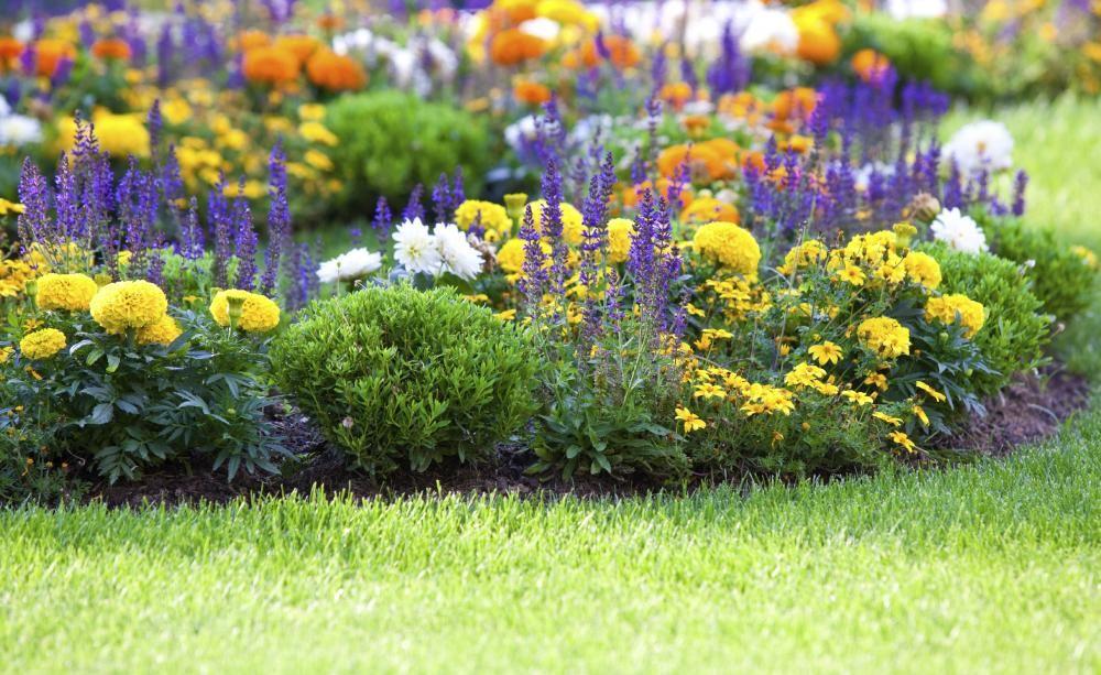 Anlegen Und Gestalten Blumenbeet Anlegen Teppichbeet Tipps