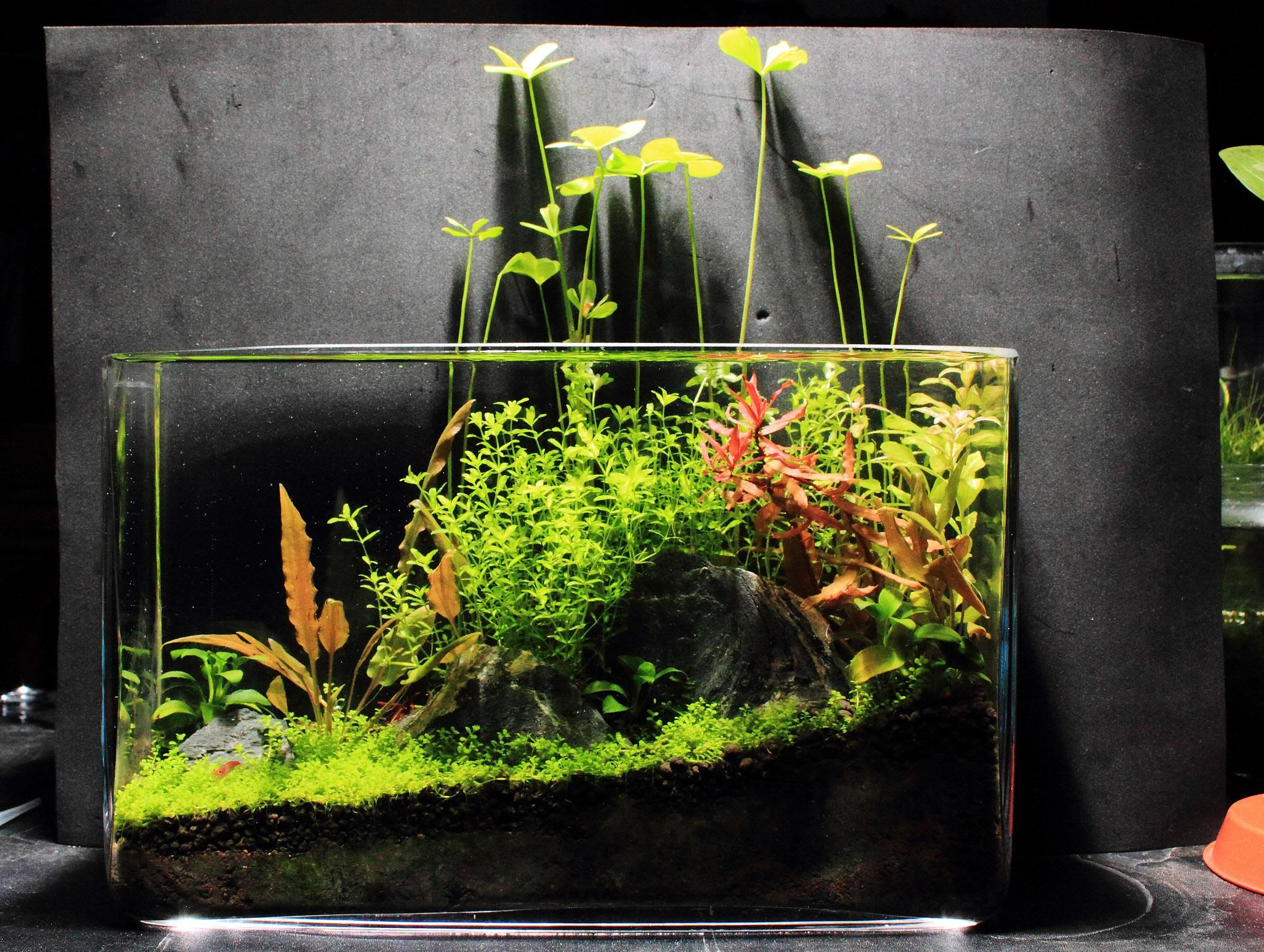 Xz 39 s 3ft high tech low tech nano experiments the for Planted tank fish