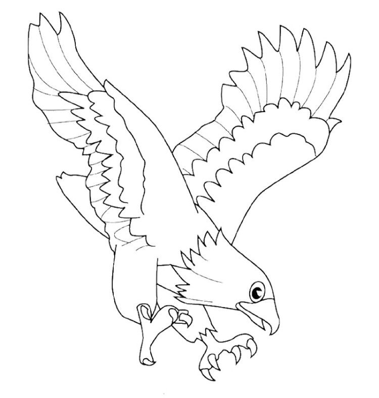 Eagle Ready To Attack Prey Coloring Pages Coloring Pages